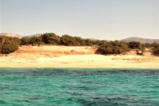 kedrodasos-Alyko-Naxos-isla